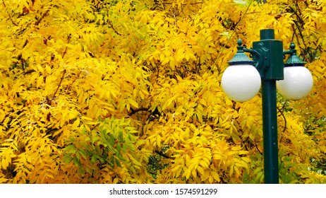 Lampposts in the country with yellow tree in background