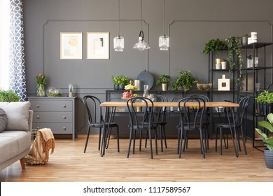 Lamps above wooden dining table and black chairs in grey open space interior with plants. Real photo