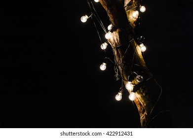 lamps on the tree beautifully illuminate the garden in the night