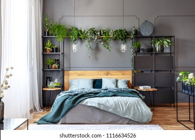 Lamps and plants above grey bed with green blanket and wooden headboard in bedroom interior. Real photo