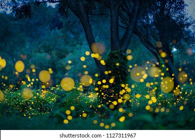 Lampyridae , Lightning Bugs Fireflies , Long exposure photo