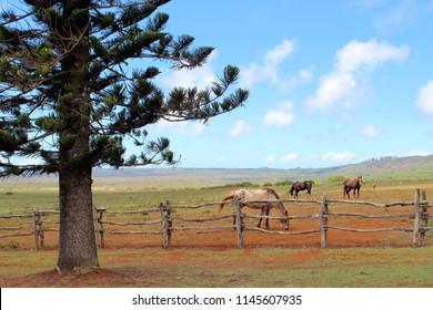 Lanai Farm Horses