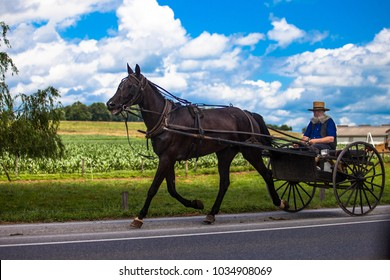 Lancaster, PA / USA - 07/19/2013: Amish old man riding a wagon along the road