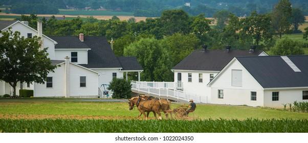 Lancaster, Pennsylvania - 6/28/2008:  Horse drawn cultivator, amish farm near Lancaster, PA