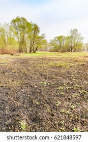 Land after fire consequences: dry ground, tree roots and bushes are burnt and devastated. Young grass is growing.