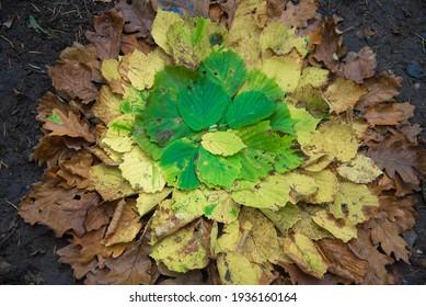 L'art de terre de l'automne multicolore décolore le dégradé de feuilles sur le sol dans la forêt. Mandala naturel créatif. Couleurs bleues, jaunes et vertes.