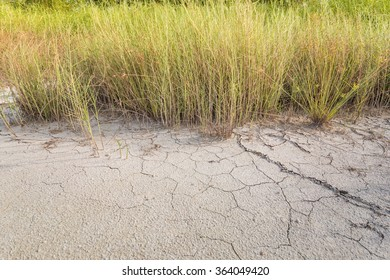 Land with dry, cracked ground and grass.