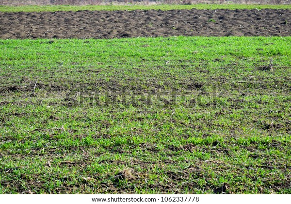 land with green grass with some plowed land