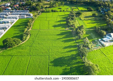 Land plot in aerial view. Include landscape, green field, crop, agricultural plant. Tract of land for housing subdivision, residential, development, owned, sale, rent, buy or investment in Chiang Mai. - Shutterstock ID 1903000657