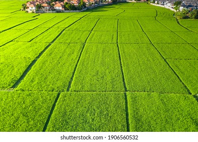 Land plot in aerial view. Include landscape, green field, crop, agricultural plant. Tract of land for housing subdivision, residential, development, owned, sale, rent, buy or investment in Chiang Mai. - Shutterstock ID 1906560532