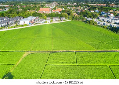 Land plot in aerial view. Include landscape, real estate, green field, crop, agricultural plant. Tract of land for housing subdivision, development, owned, sale, rent, buy or investment in Chiang Mai.