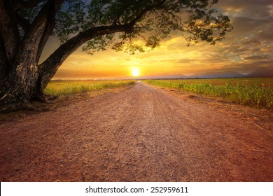 land scape of dusty road in rural scene and big rain tree plant against beautiful sunset sky use for natural background