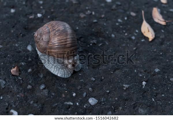 land-snail-hiding-shell-on-600w-15160426