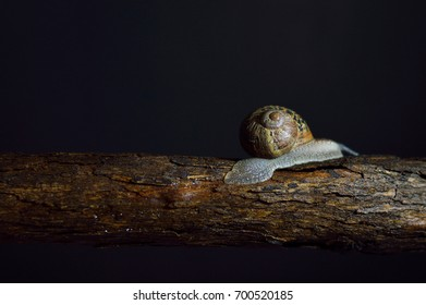 Land snail photo for your bug projects or nature publications.