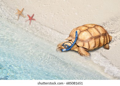 land turtle go into see as wear swimming goggles and snorkeling gear, funny safety and paradox concepts