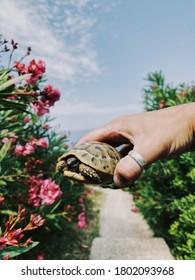 tortue terrestre aux mains d'un homme en mer
