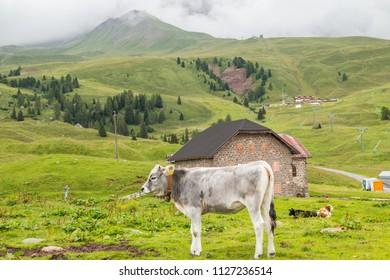 Landescape of the San Pellegrino Pass, Val di Fassa, Trentino Alto Adige, Italy