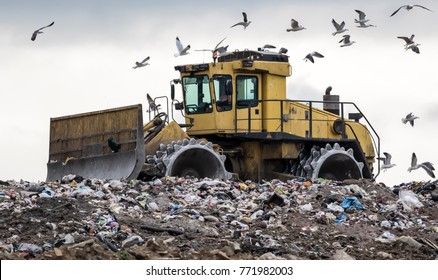 Landfill bulldozer attracts scavenging birds