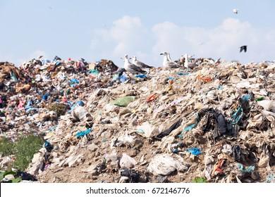 Landfill site. Garbage dump.