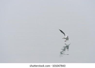 Landing in the lake