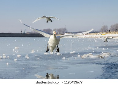 landing of a swan in an ice world landscape