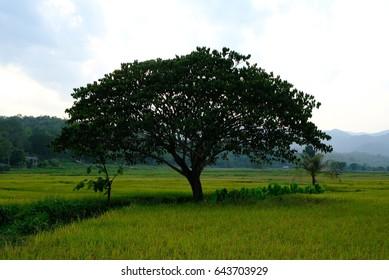Landmark  Rice Thailand