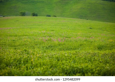 lands cultivated with spring blooms, agricultural lands cultivated in spring