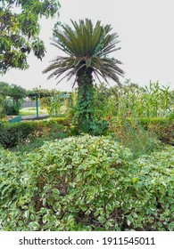 landsacpe for green nature plamtree and green plants