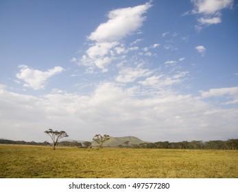 landscape in the Aberdare National Park in Kenya Africa