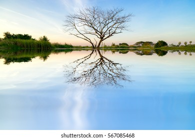 Landscape abstract background. Dry dead tree alone without leaves on blue sky background reflects on water