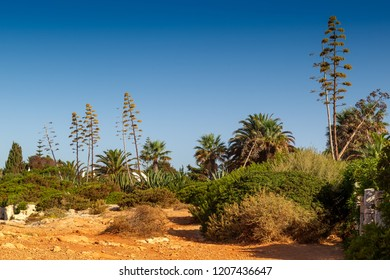 Landscape with agaves and palm trees