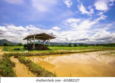 Landscape of agricultural area to prepare rice