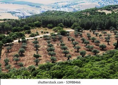 Landscape. Agriculture land.