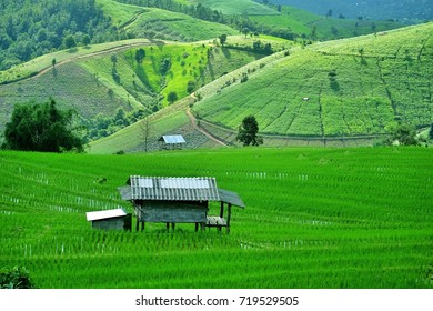 landscape of agriculture and rice field on valley,chiangmai thailand.