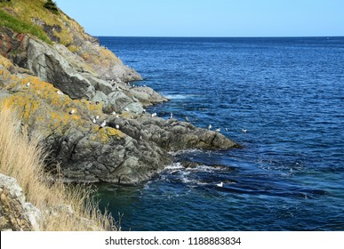 landscape along the Killick Coast,  coastline  of Torbay Bight, Avalon Peninsula, NL Canada