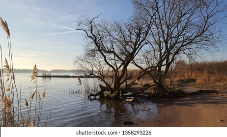 Landscape along river in Biesbosch National Park, South Holland, Netherlands