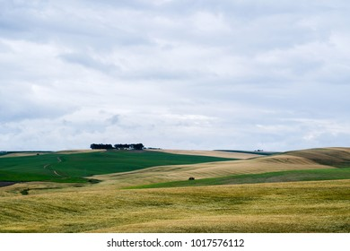 Landscape in Andalusia, Spain with fields and meadows on the hills with some trees