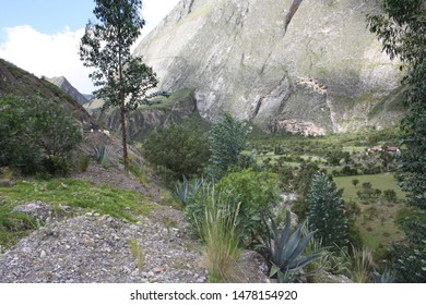 landscape andean andes mountain trees