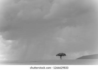Landscape with animals in Massai Mara