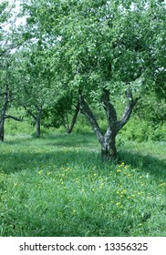 Landscape with apple-trees on green the right with yellow and white dandelions.