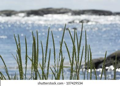 Landscape in the archipelago, Sweden.