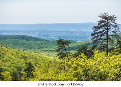 Landscape of The area around Long Pine Reservoir in Michaux State Forest in Central Pennsylvania