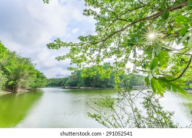 Landscape around lake surrounded by big trees.