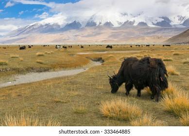 Landscape around Muztagh Ata and Karakuli Lake, Pamir Mountains, Kasgar, Xinjiang, China