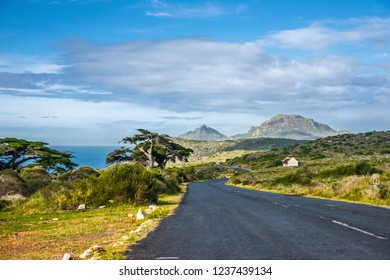Landscape at the Atlantic ocean coast in Western Cape province of South Africa: a road to Cape of Good Hope and blooming red aloe vera under the tree.