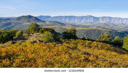 landscape in the Aude area in France in autumn