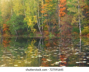 Landscape. Autumn bright multicolored forest above a pond with water lilies
