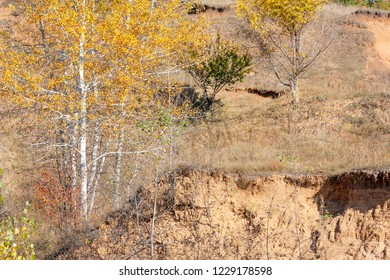 Landscape with autumn trees on wild enviroment