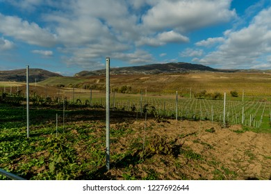 Landscape with autumn vineyards. Distant mountains green meadow.