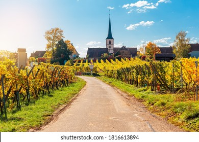 Landscape with autumn vineyards in region Alsace, France near village of Mittelbergheim at sunny day